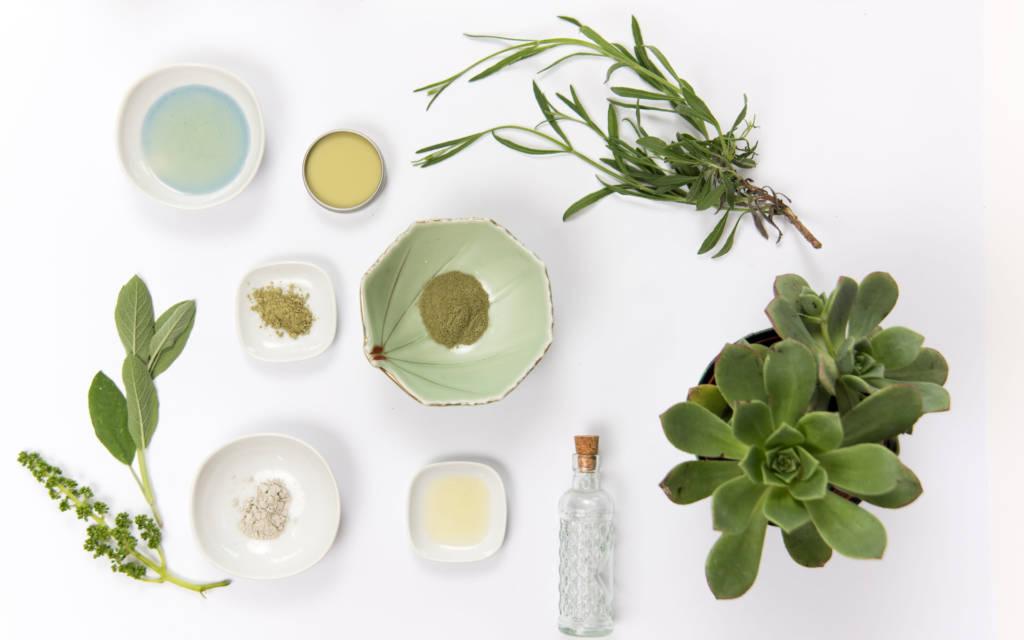 plantes_medecine_naturelle_naturopathie_contact_Toulouse_Elisabeth_lacoste