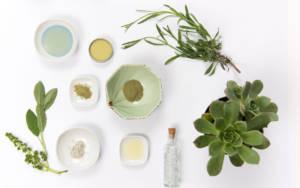 plantes_medecine_naturelle_naturopathie_contact_Toulouse_Elisabeth_lacoste_original